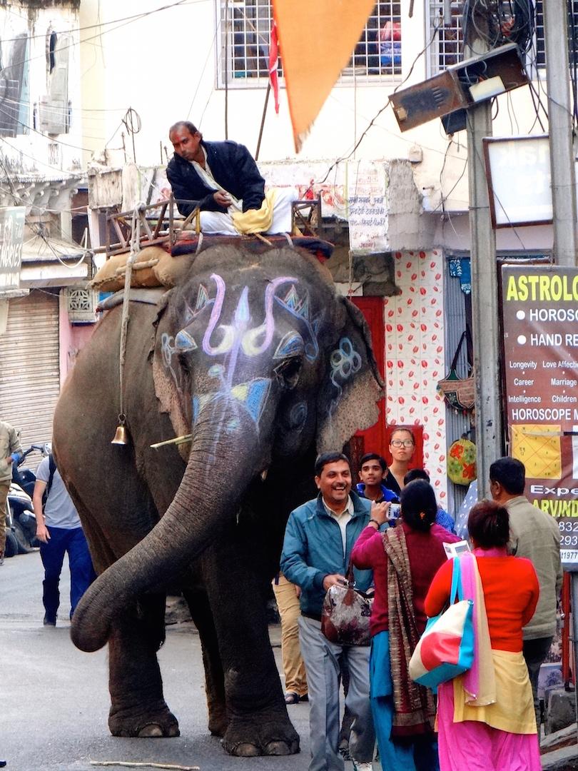 Udaipur Rajasthan Inde Inde du Nord Eléphant