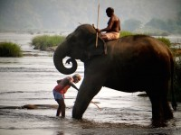 Sur la route de Munnar, du thé et des éléphants !
