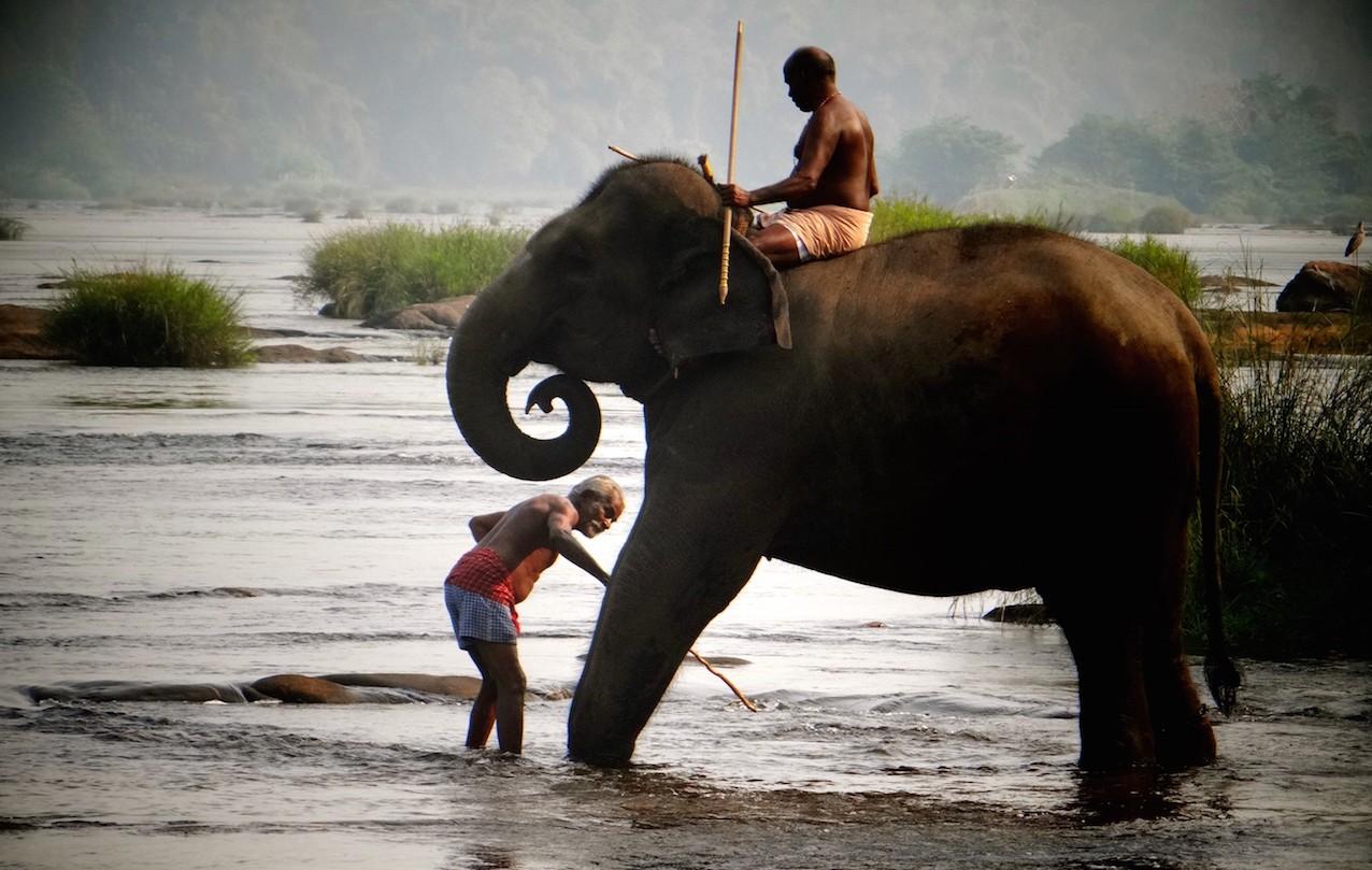 Munnar Elephants
