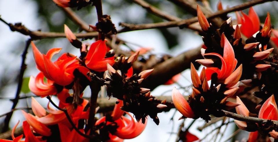 Fleurs Wayanad