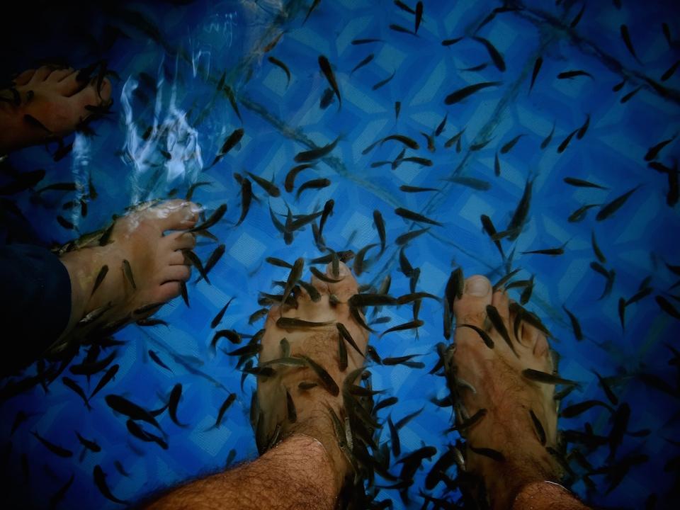 Fish Spa Wayanad